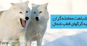 شباهت معامله گران به گرگهای قطب شمال